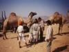 003-pushkar-camel-fair-2001