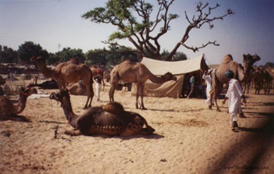 004-pushkar-camel-fair-2001
