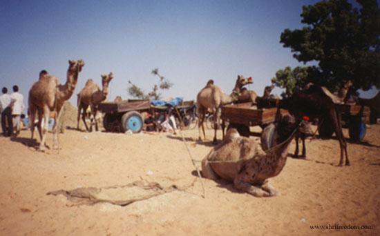 005-pushkar-camel-fair-2001