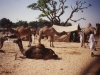 004-pushkar-camel-fair-2001