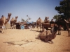 005-pushkar-camel-fair-2001